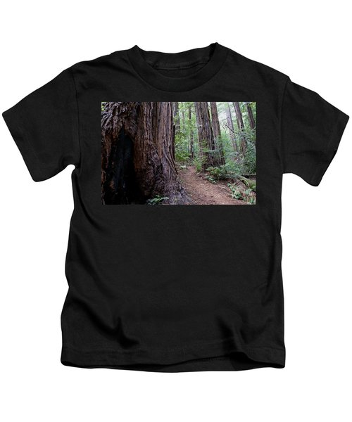 Pathway Through A Redwood Forest On Mt Tamalpais Kids T-Shirt