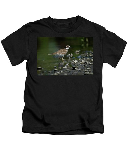 Killdeer  Kids T-Shirt by Douglas Stucky