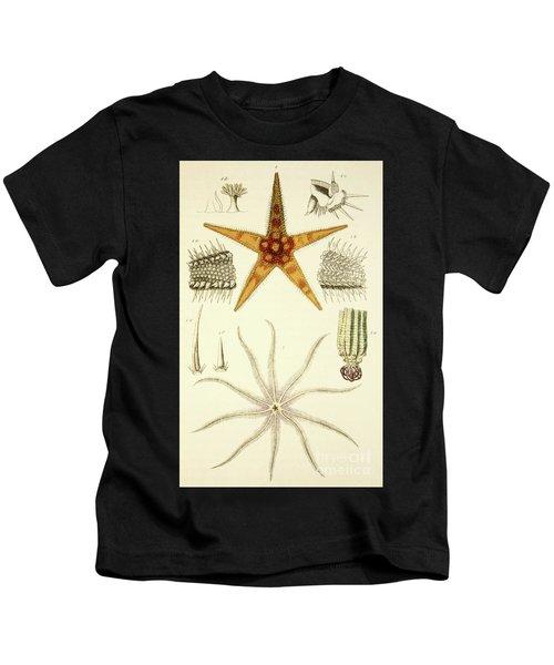 Asterias Aurantiaca And Comatula Carinata, From The Mollusca And Radiata Kids T-Shirt