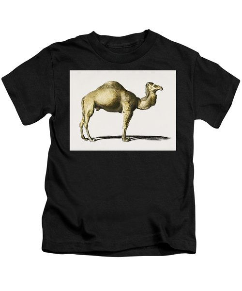 Camel  Camelus  Illustrated By Charles Dessalines D' Orbigny  1806-1876  Kids T-Shirt
