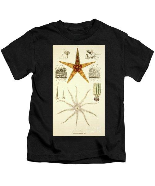 Starfish  Asterias Aurantiaca And Comatula Carinata Kids T-Shirt
