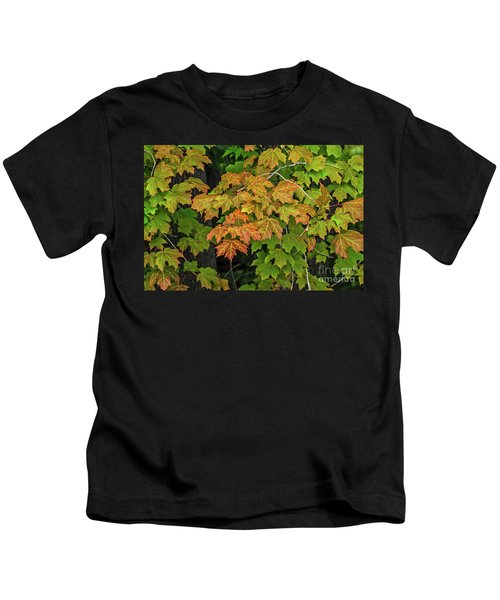 Various Stages Of Fall Color On Maple Leaves Kids T-Shirt