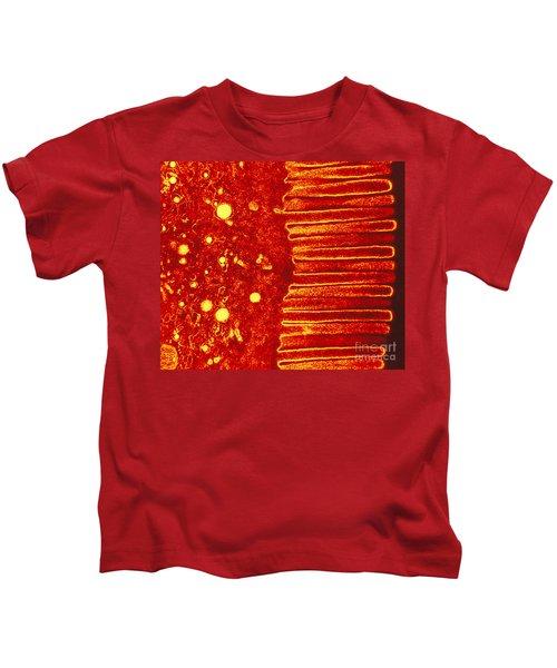 Digestive Sytem Kids T-Shirt
