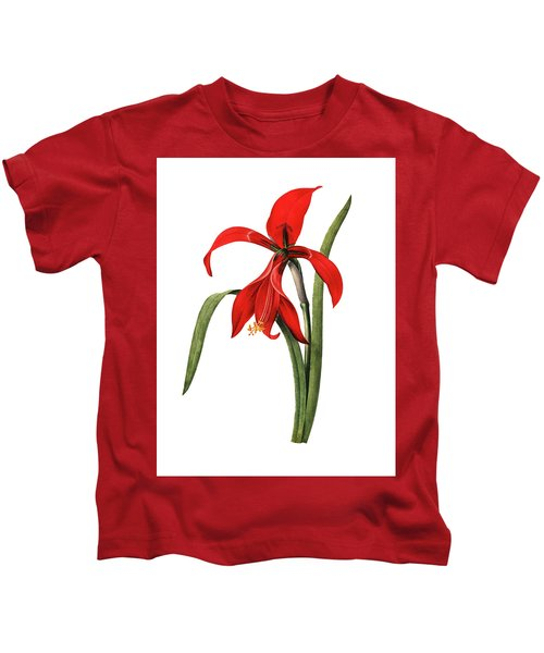 Amaryllis Antique Flower Illustrations  Kids T-Shirt