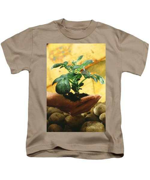 Potato Plant Kids T-Shirt by Science Source