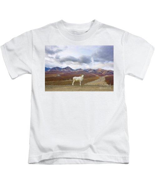 Dalls Sheep Ram Denali National Park Kids T-Shirt