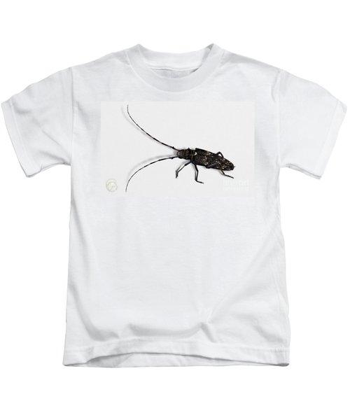 Long-hornded Wood Boring Beetle Monochamus Sartor - Coleoptere Monochame Tailleur - Kids T-Shirt