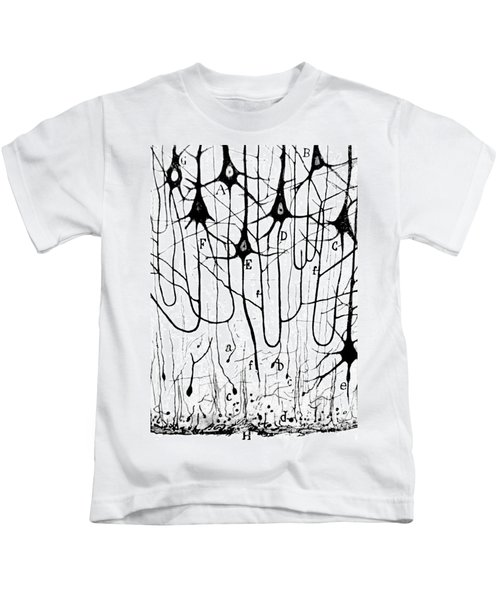 Pyramidal Cells Illustrated By Cajal Kids T-Shirt