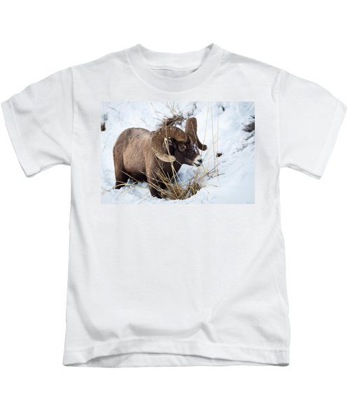Rocky Mountain Bighorn Sheep Kids T-Shirt