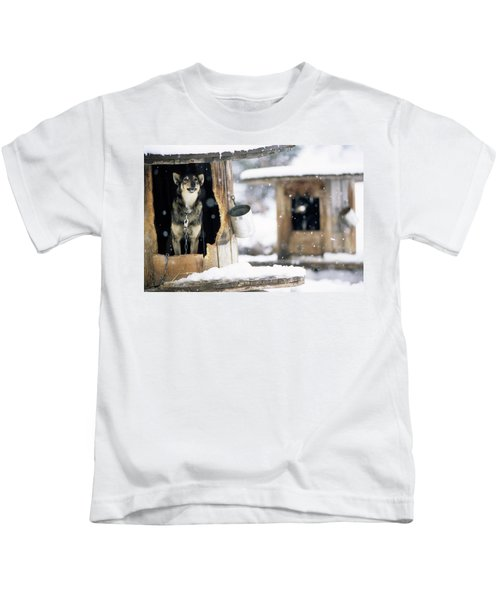 Sled Dogs Rest In Their Kennels Kids T-Shirt
