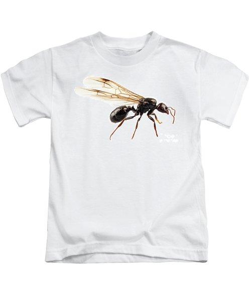 Black Winged Garden Ant Species Niger Lasius Kids T-Shirt