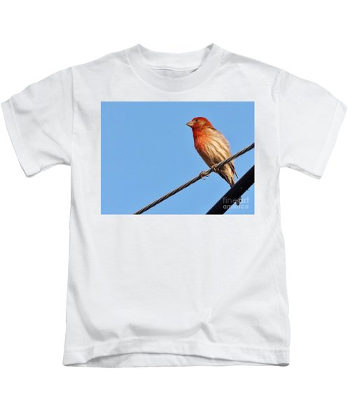 American Crossbill On Wire     Spring   Indiana   Kids T-Shirt by Rory Cubel