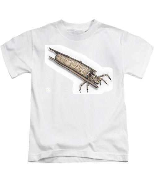 Caddisfly Limnephilidae Anabolia Nervosea Larva Nymph -  Kids T-Shirt