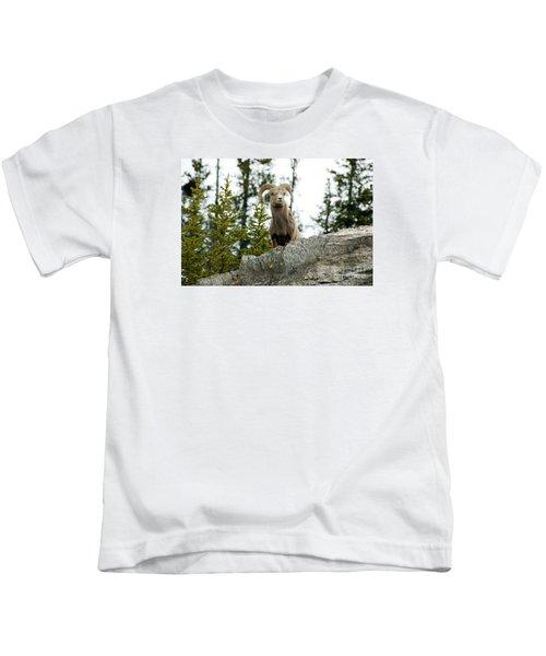 Canadian Bighorn Sheep Kids T-Shirt