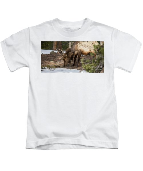 Elk Grazing In Rocky Mountain National Park Kids T-Shirt