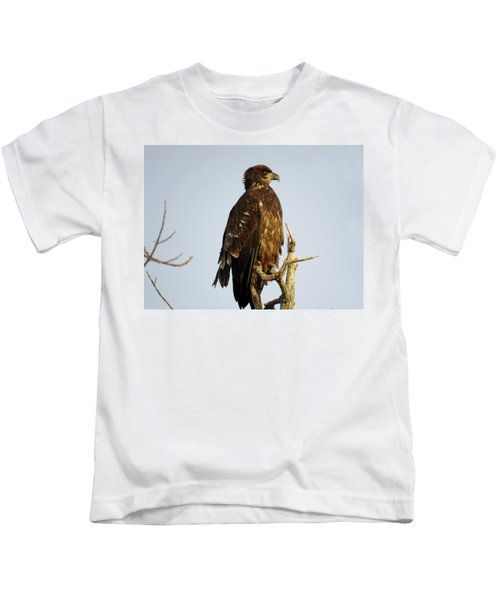 Juvenile Bald Eagle 1 Kids T-Shirt