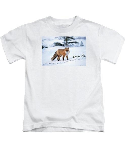 Red Fox Vulpes Vulpes Portrait Kids T-Shirt