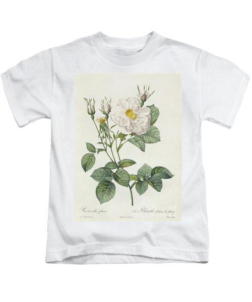 Rosa Alba Foliacea Kids T-Shirt