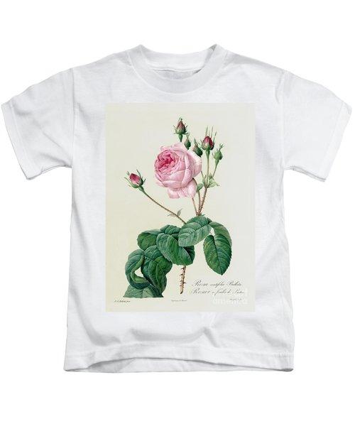 Rosa Centifolia Bullata Kids T-Shirt