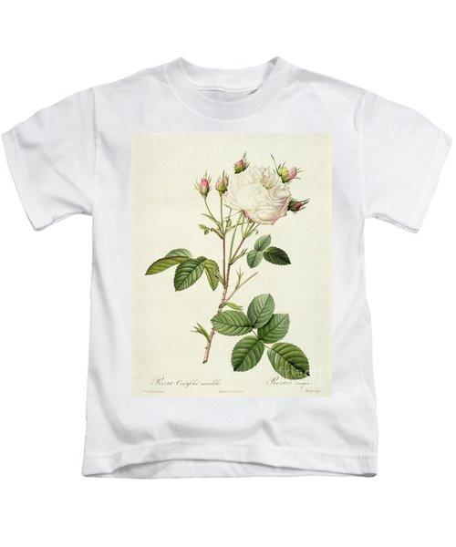 Rosa Centifolia Mutabilis Kids T-Shirt