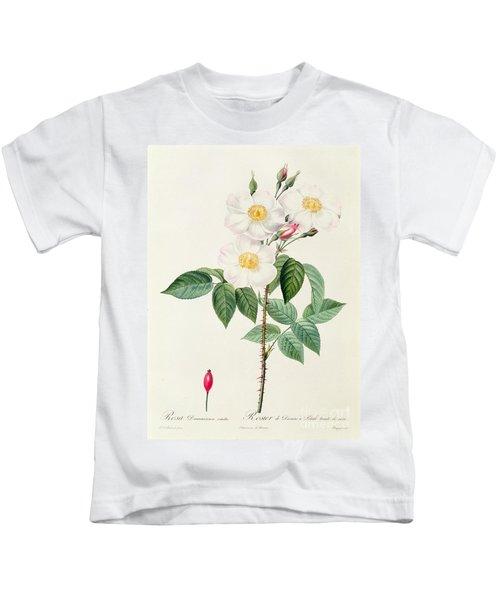 Rosa Damascena Subalba Kids T-Shirt