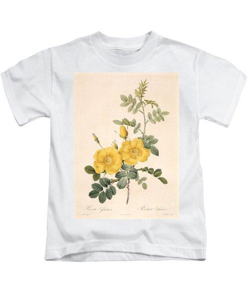 Rosa Eglanteria Kids T-Shirt