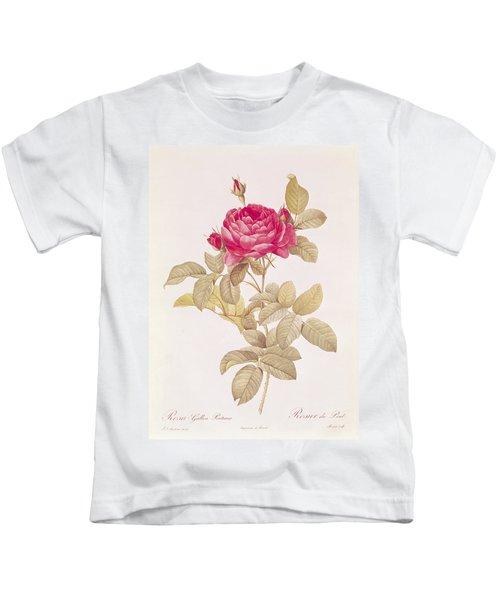 Rosa Gallica Pontiana Kids T-Shirt