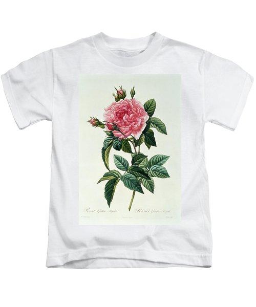 Rosa Gallica Regalis Kids T-Shirt