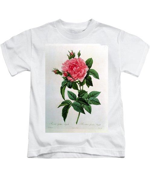 Rosa Gallica Regallis Kids T-Shirt
