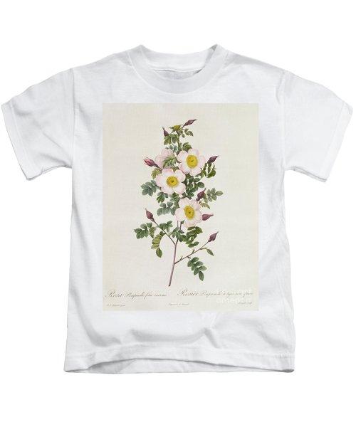 Rosa Pimpinelli Folia Inermis Kids T-Shirt