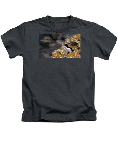 Razorbill Bird Kids T-Shirt by Dreamland Media