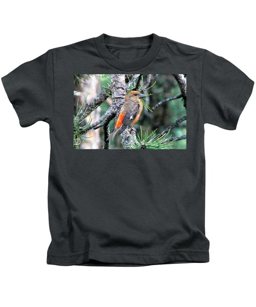 Red Crossbill On Pine Tree Kids T-Shirt by Marilyn Burton