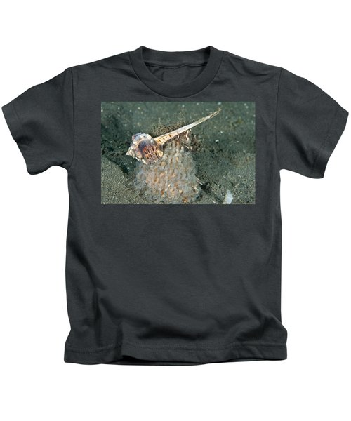 Woodcock Murex Depositing Eggs Kids T-Shirt