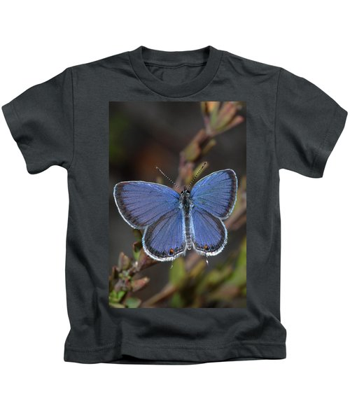Eastern Tailed Blue Butterfly Kids T-Shirt
