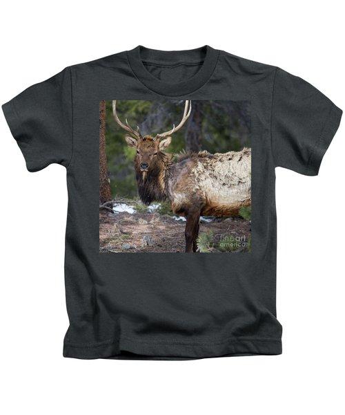 Elk In Rocky Mountain National Park  Kids T-Shirt