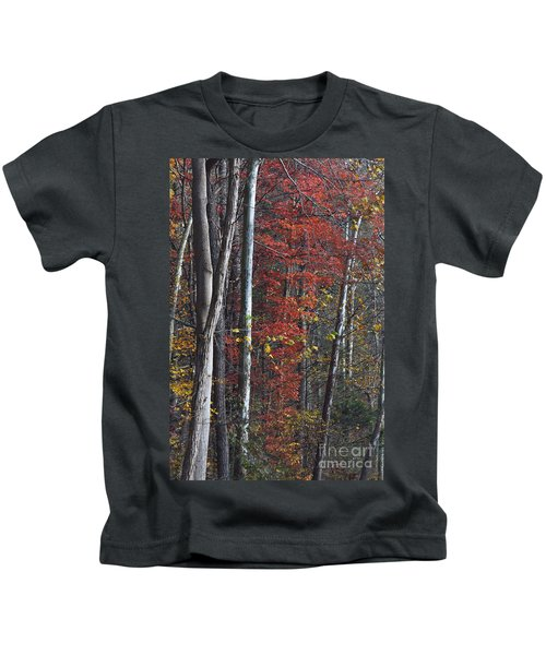 Autumn Trees 8261c Kids T-Shirt