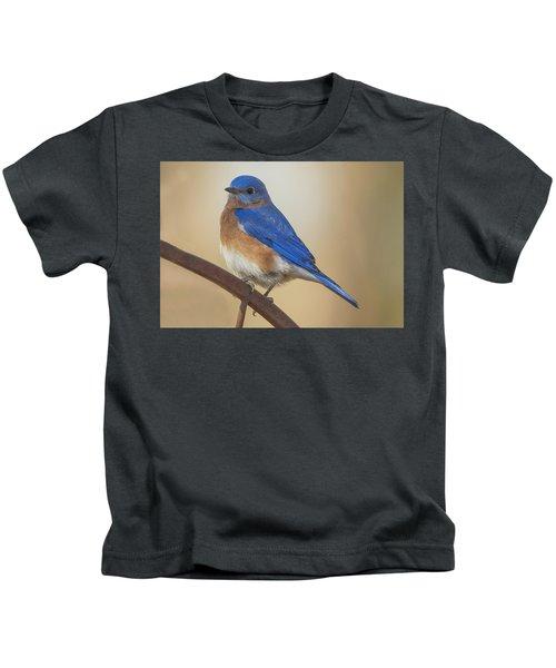 Eastern Blue Bird Male Kids T-Shirt