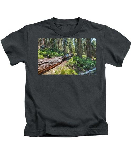 Fallen Tree- Kids T-Shirt