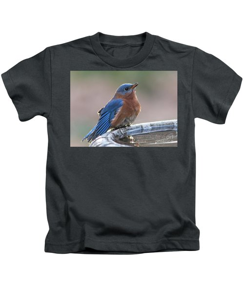 Male Eastern Blue Bird Kids T-Shirt