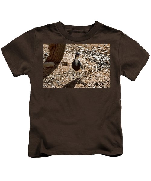 Banded Lapwing Kids T-Shirt by Douglas Barnard