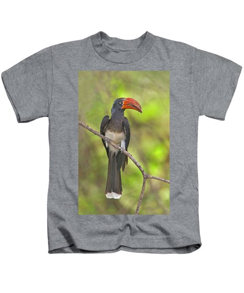 Crowned Hornbill Perching On A Branch Kids T-Shirt