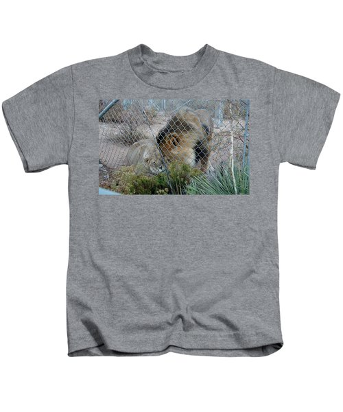 Out Of Africa Lions 4 Kids T-Shirt