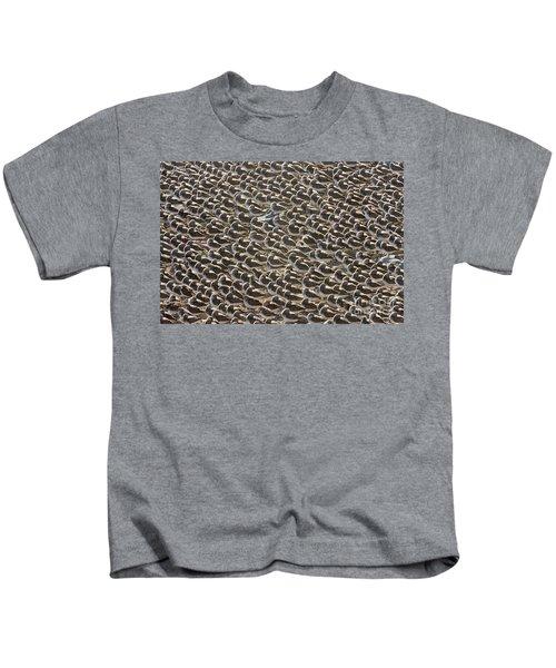Semipalmated Sandpipers Sleeping Kids T-Shirt by Yva Momatiuk John Eastcott