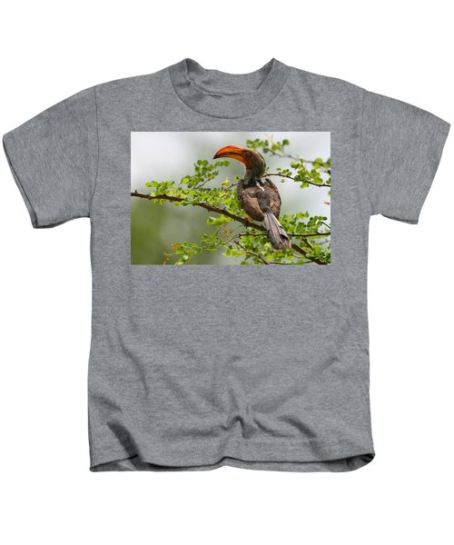 Yellow-billed Hornbill Kids T-Shirt by Bruce J Robinson
