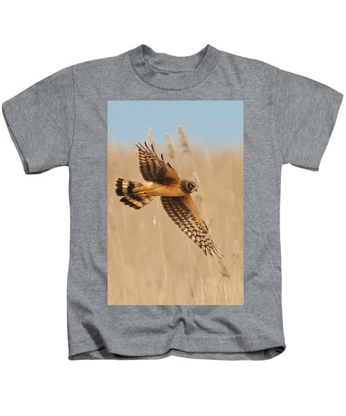 Kids T-Shirt featuring the photograph Harrier Over Golden Grass by William Jobes