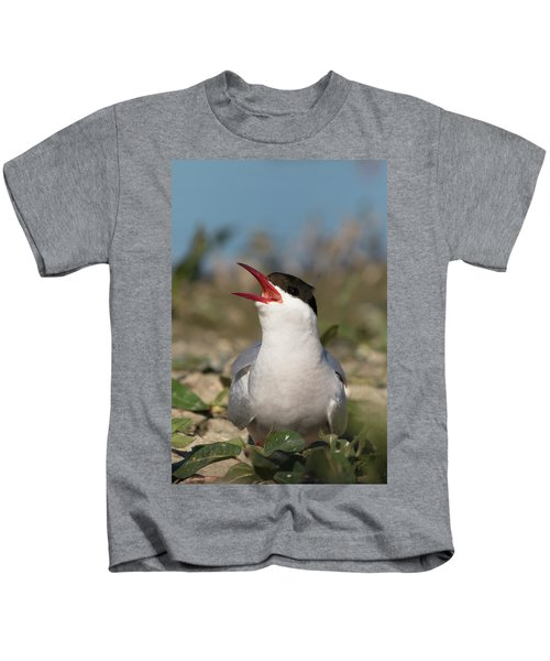 Arctic Tern - St John's Pool, Scotland Kids T-Shirt