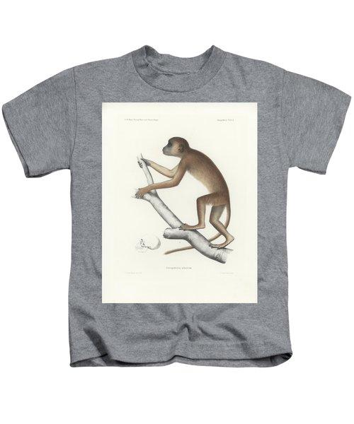 Central Yellow Baboon, Papio C. Cynocephalus Kids T-Shirt
