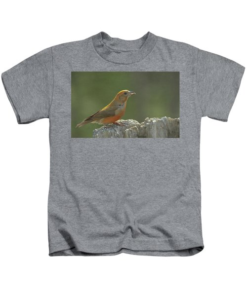Red Crossbill Kids T-Shirt by Constance Puttkemery