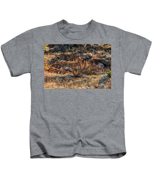 Rocky Mountain National Park Deer Colorado Kids T-Shirt