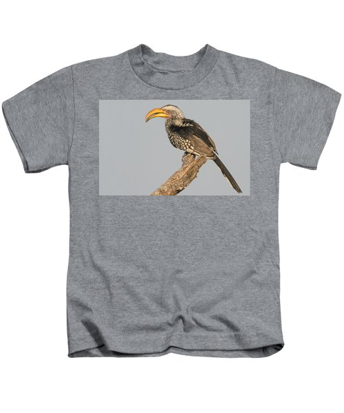 Southern Yellow-billed Hornbill Tockus Kids T-Shirt by Panoramic Images